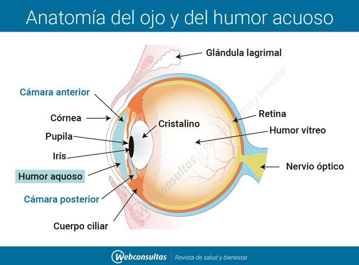 Glaucoma, qué es y qué consecuencias tiene