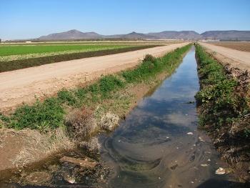 Los vegetales regados con aguas contaminadas pueden ser focos de infección de E. coli