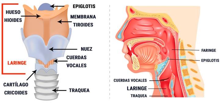 Laringitis, qué es y cómo afecta a niños y adultos