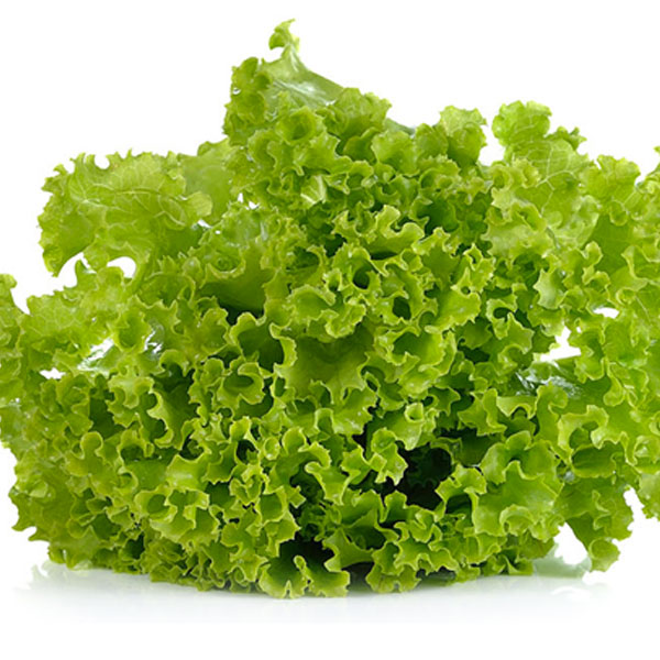 Tipos de lechugas para tu ensalada dieta y nutrici n - Diferentes ensaladas de lechuga ...