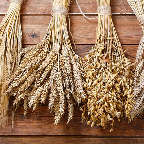 Alimentos principales de la dieta nórdica: cereales de grano