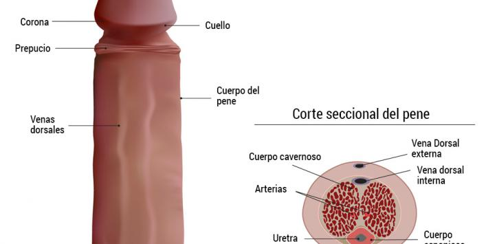 cancer de pene vph