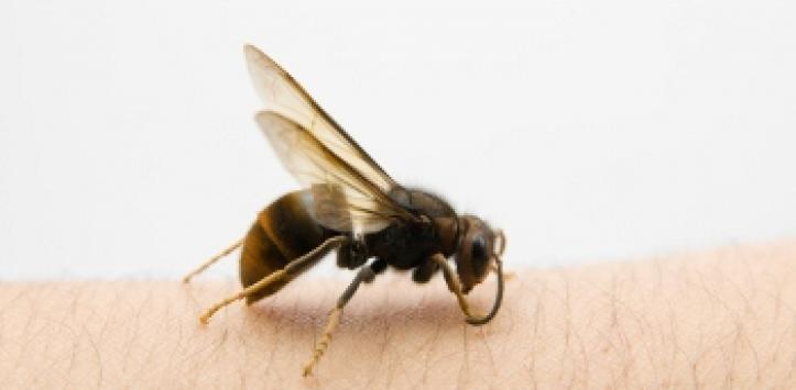 Picaduras de insecto