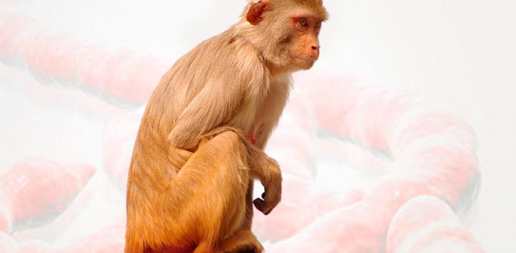 Mono transmisor del ébola