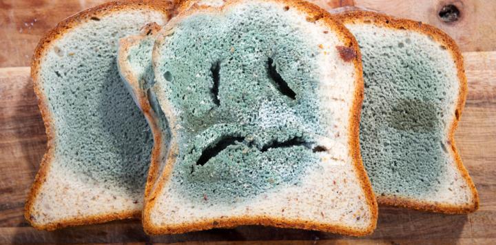 Alimentos con moho debo tirarlos - El moho es un hongo ...