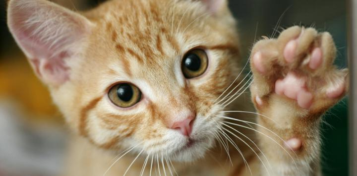 La curiosidad mató al gato