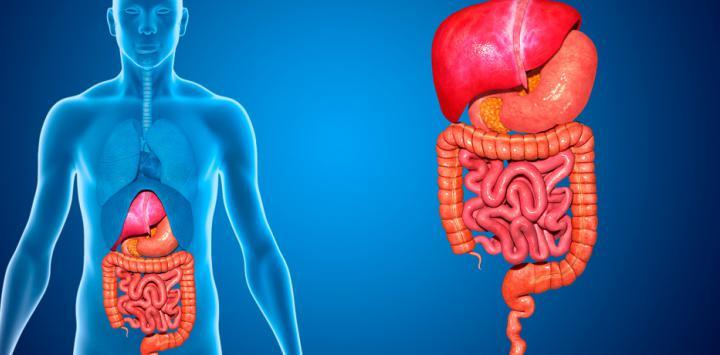 Resultado de imagen para imagenes de aparato digestivo
