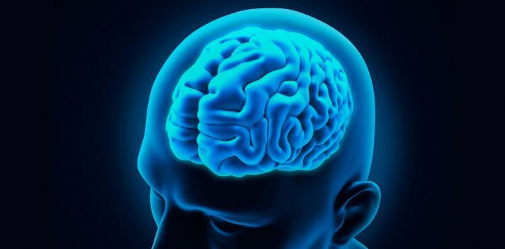 Cerebro : Noticias Y Artículos
