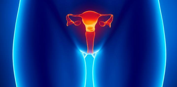 Ovarios : noticias y artículos