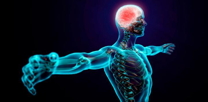 Sistema nervioso Lecturas-2