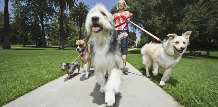 Asocian tener una mascota con menor riesgo cardiaco