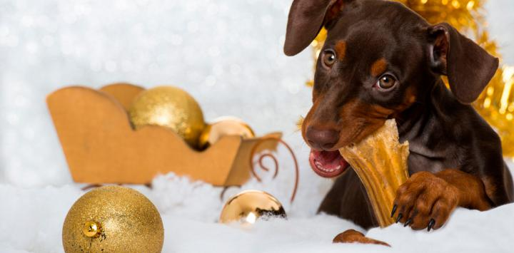 Perro mordiendo adornos de Navidad