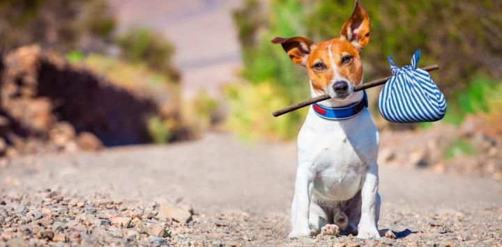 Perro abandonado sujeta un hatillo con la boca