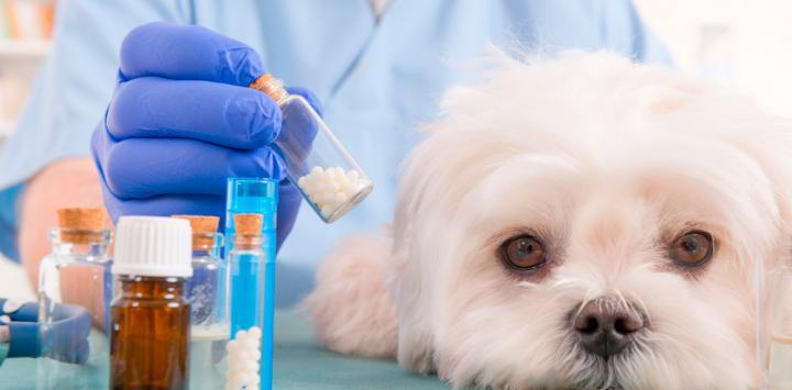 Fármaco para el linfoma del perro