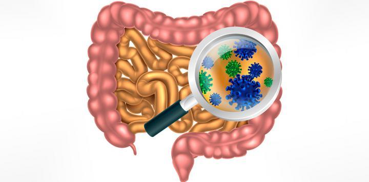 Dibujo de intestino visto con lupa