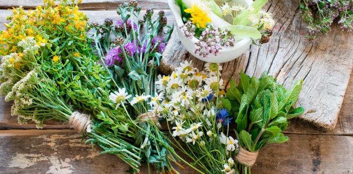 Son seguros los productos de hierbas medicinales for Hierbas y plantas medicinales