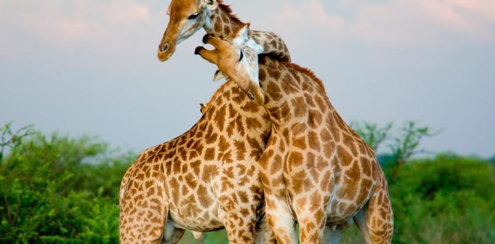 Los animales también son homosexuales y bisexuales