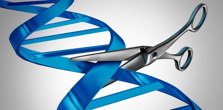 La técnica CRISPR, eficaz en el tratamiento de Duchenne