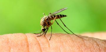 Primer caso de chikungunya autóctono en España