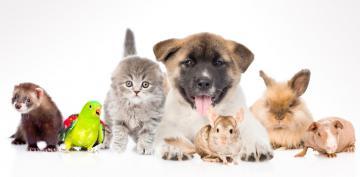 Perro, gato, ave, hurón, roedor, conejo, cobaya