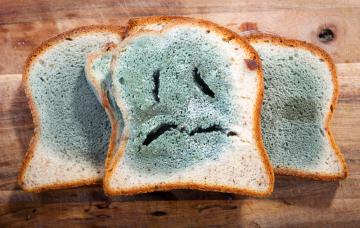 Rebanadas de pan de molde cubiertas de moho verde