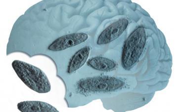 Ameba 'come-cerebros', un parásito mortal