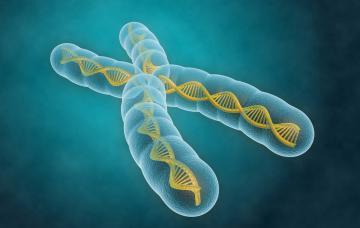Crean el primer cromosoma artificial de la Historia