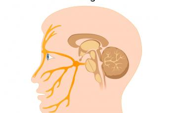 Nervio trigeminal