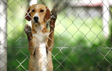 Cómo funcionan los albergues de animales