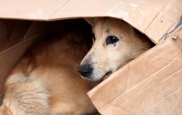 Un perro abandonado se refugia en una caja de cartón