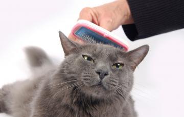 Un hombre cepilla a su gato para eliminar el exceso de pelo