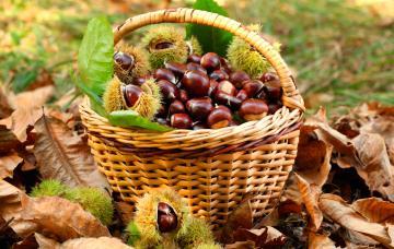 Castañas, regalo de otoño e invierno