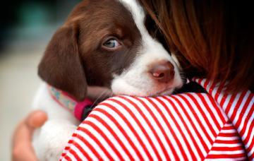 Perro dependiente en brazos de su dueña