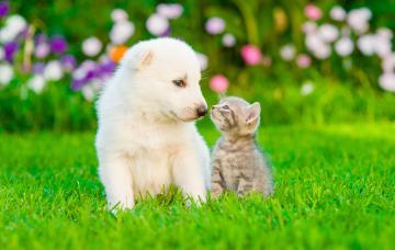 Un cachorro de perro y un gatito juntan sus hocicos en un jardín