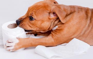 Trastornos de alimentación en el perro