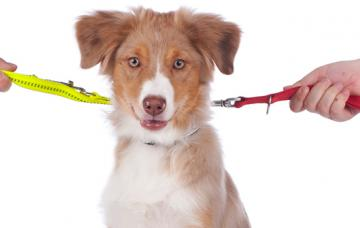 Divorcio y mascotas
