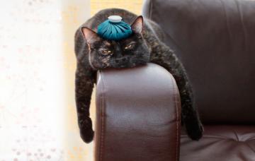 Estrés felino