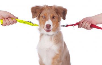 Cada uno de los miembros de una pareja sujeta una correa atada al collar de un perro