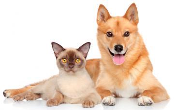 El celo en perras y gatas