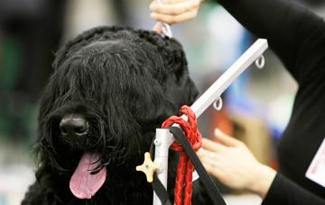 Un peluquero canino atendiendo a un perro