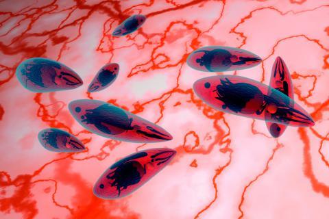 Resultado de imagen para toxoplasmosis