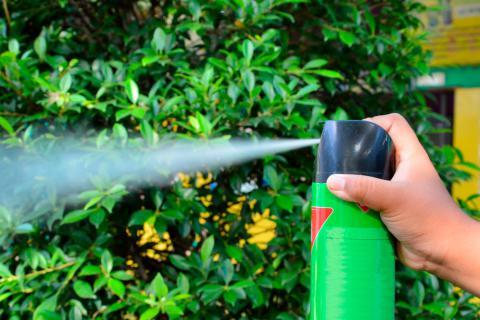 Intoxicaci n del gato por insecticidas y antiparasitarios for Casa del insecticida