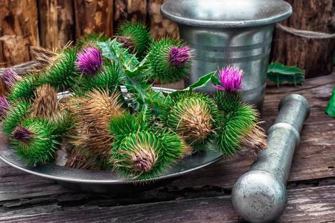 la garcinia cambogia interfiere con las estatinas