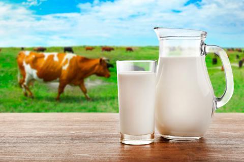 qu233 es la leche tipos de leche existentes y etiquetado
