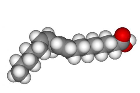 Tipos de lípidos