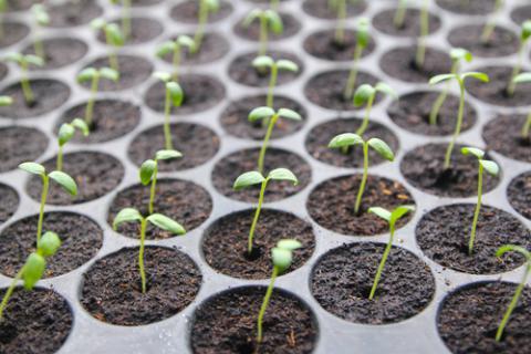 Cómo empezar a cultivar tu propio huerto - Belleza y bienestar