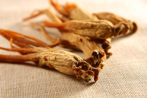 Ginseng el mejor estimulante natural
