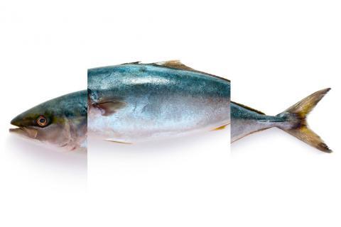 Las partes del pescado