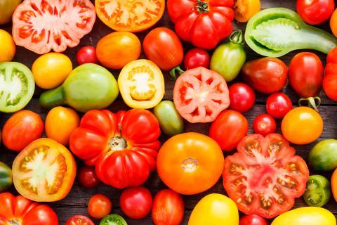 Origen del tomate