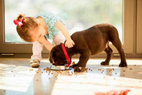 Un cachorro de perro come mientras una niña pequeña le acaricia